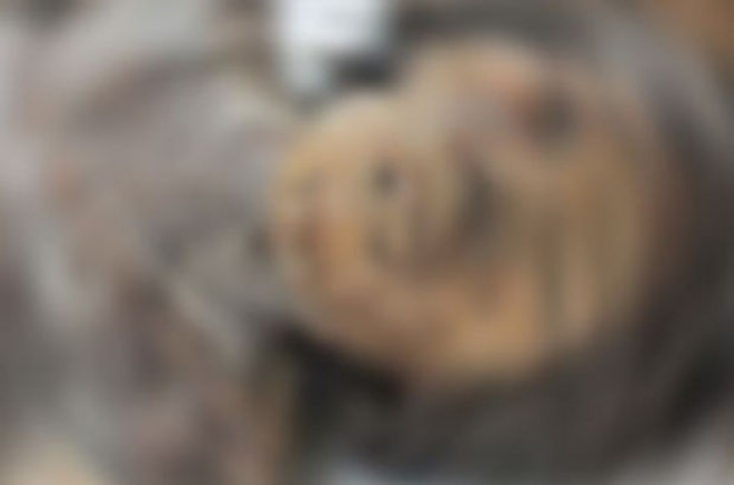 Avusturya'da bir adamın ölen annesini, emekli maaşını alabilmek için mumyalayıp bodrum katında sakladığı ortaya çıktı
