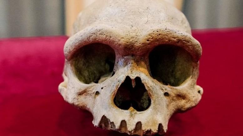 Çin Bilim insanları, insanın evrimine dair önemli bilgiler içeren kafatasıyla ilgili bilgileri paylaştı