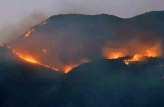 Dersim Hozat'ta ormanlarımız yanıyor