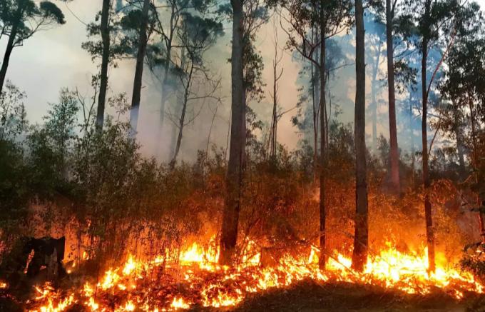 Graz'da Ormanlık bölgede sigara içmek ve ateş yakmak yasakladı