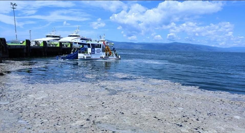 Kocaeli'nin doğa harikası 4 Mavi bayraklı plajında salya istilası