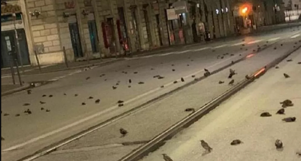 Roma'da havai fişekler yüzlerce kuşun ölümüne neden oldu