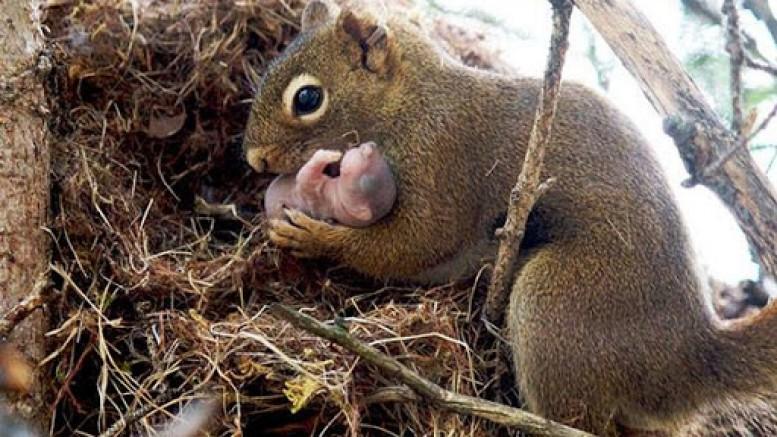 Sincaplara doğum kontrol hapı